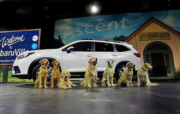 スバル アセントのお披露目会と8頭の犬