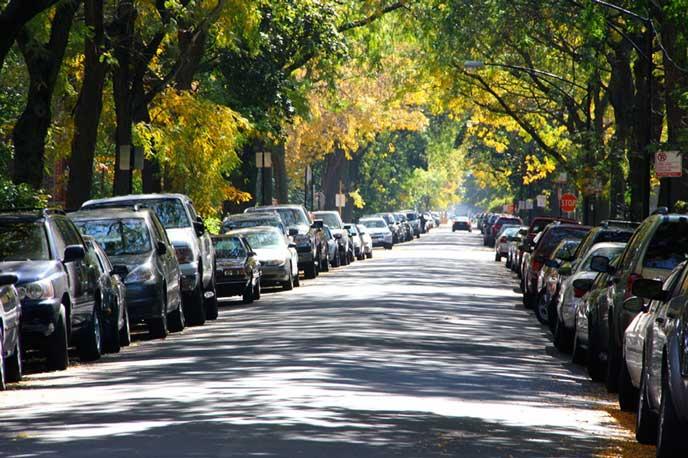 街路樹にとまる路上駐車の車