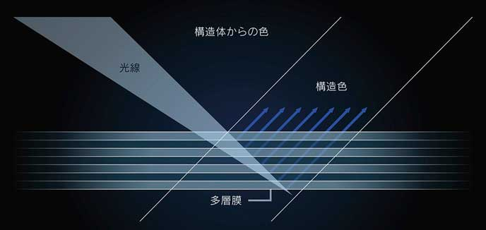 LC特別仕様車Structural Blueの塗装原理